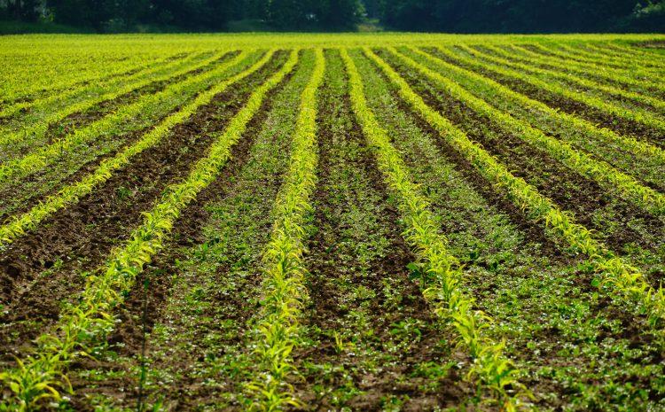 Tarım Sigortalarında 2020 Tarifesi Açıklandı